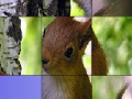 Game Cute squirrels slide puzzle. Play online